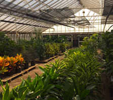 Wholesale plants | Greenhouse | Denver | Colorado