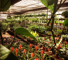 Wholesale Greenhouse | House Plants | Wholesale Plants | Denver | Colorado